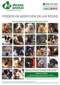 Cartel PDF de perros en adopción en las Rozas