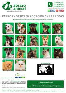 Cartel perros y gatos en adopción en Las Rozas