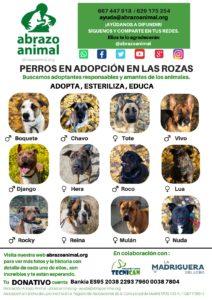 PERROS EN ADOPCIÓN Abrazo Animal Las Rozas 2019 JPG CARTEL