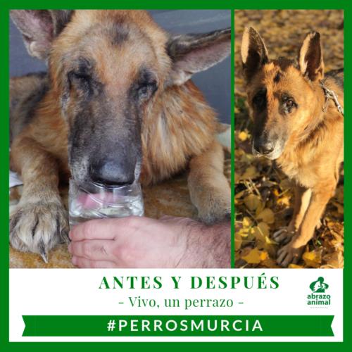 #PERROSMURCIA RESCATE DE VIVO Y 6 PERROS MÁS