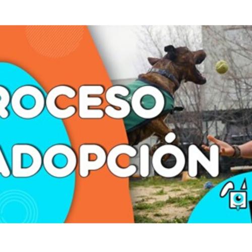 PROCESO DE ADOPCIÓN DE PERROS Y GATOS.