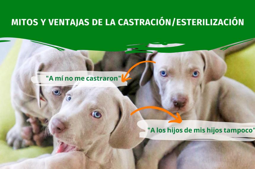 Mitos y Ventajas de la Castración/Esterilización de animales