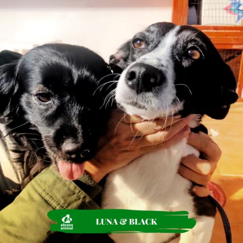 Luna & Blacky