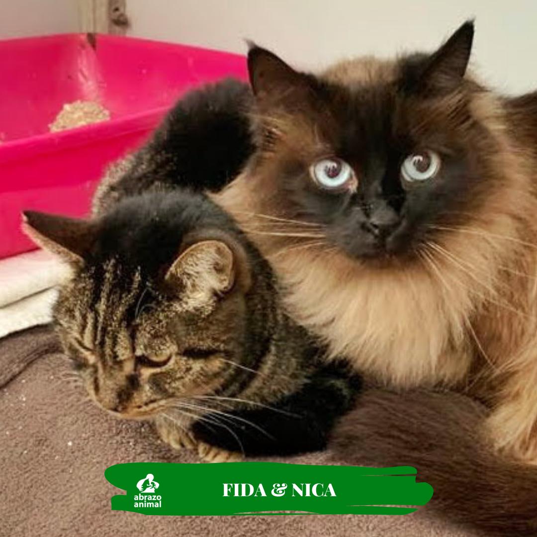 Nida & Fida