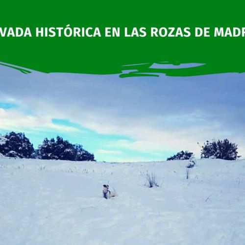 Solidaridad en la nevada Histórica en Las Rozas de Madrid