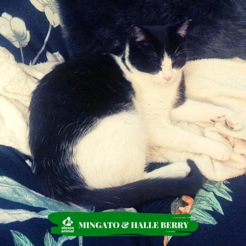 Mingato & Halle Berry