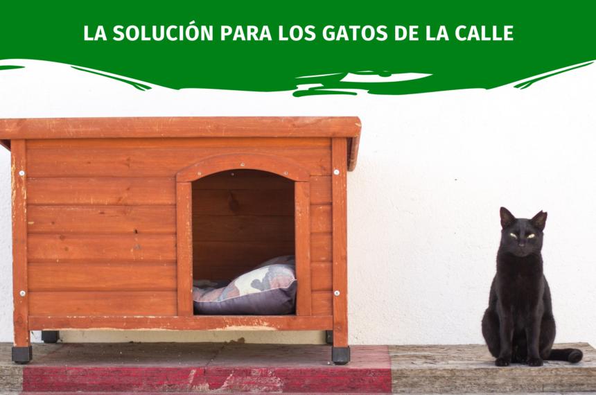 La solución para los gatos de la calle