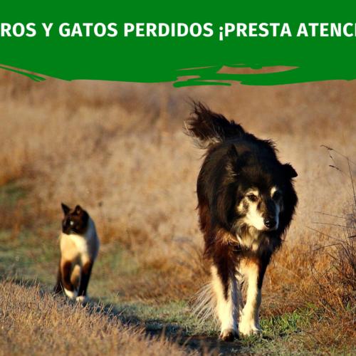 Perros y Gatos Perdidos y encontrados ¡PRESTA ATENCIÓN!